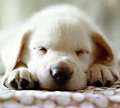 buscame....... 1992d1220394223-un-lindo-cachorro-cachorrito