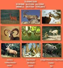 http://t3.gstatic.com/images?q=tbn:gN7fyqdcIobbzM:http://www.sayfamiz.com/avturleri/memeli_hayvanlar_jpg.jpg&t=1