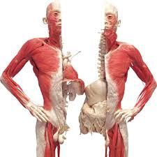 Zajímavosti o lidském těle