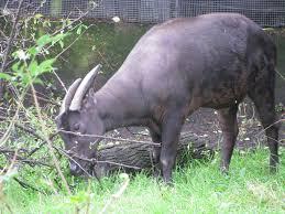 9 Binatang Asli Indonesia Yang Hampir Punah