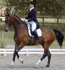 about Classical Dressage!