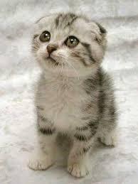 external image cat.jpg%26w%3D313%26h%3D417