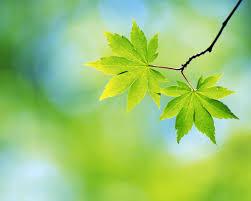 برگ سبز بهاری