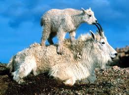Amor de madre Animales-curiosos-20