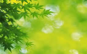 2560x1600 Fresh Green leaves
