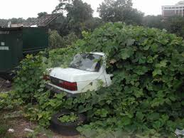 Kudzu covering a car