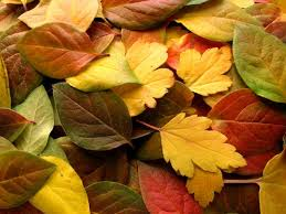 ریزش برگ های پاییزی