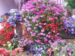 هدية لكل عضو Fleurs%2520lavaill