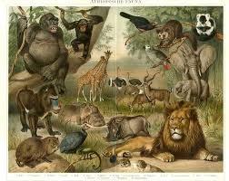 Animales extintos de todo el mundo