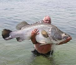 You show a picture, another member shows the one you request Big-fish