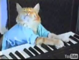Keyboard cat Lo mejor! xD Keyboard-cat