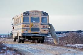 Bus Churchill Manitoba