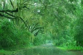 بارش باران در جنگل سر سبز