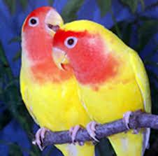 �����: �����. ����. ������. ����� lovebirds1eg2.jpg