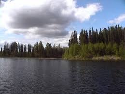 Trees on the Lakeside
