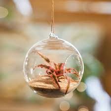 Glass Ball Hanging Terrarium ...