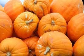 Pumpkin Patch North Bend Oregon by Autumn Harvest At Lane County Farms Weekend The Register Guard