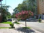 imagem de Boa Vista do Sul Rio Grande do Sul n-6
