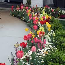 Flowers For Flower Beds by Fall U0026 Winter Flower Beds Landscape Makeover Folsom U0026 Sacramento