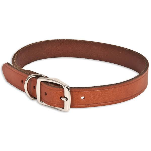Aspen Pet 10831 Dog Collars, Leather, 1 x 22 inch