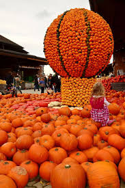 Cal Poly Pomona Annual Pumpkin Patch by 38 Best Isparta Images On Pinterest Carpets Turkey And Roses