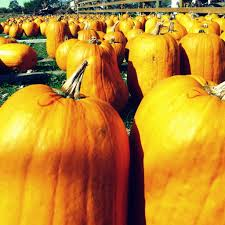 Pumpkin Fest Highwood by Little Lake County Guide To Fall Festivals Little Lake County