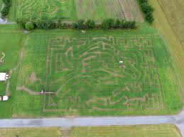 Pumpkin Patch Albany Ny by New York U0027s Best Corn Maze The Amazing Maize Maze Is A Great Fun