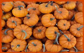 Best Pumpkin Patch Richmond Va by Holy Cross Church Sugar Land Texas Usa Pumpkin Patch