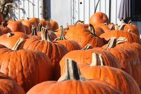 Pumpkin Seed Oil Prostate Side Effects by Pumpkins For Hallowe U0027en But Pumpkin For Menopause Blog