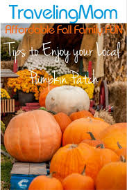 Cal Poly Pomona Annual Pumpkin Patch by Best 25 Local Pumpkin Patch Ideas On Pinterest Mums And