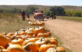 Pumpkin Patch Pueblo County by Venetucci Farm Pikes Peak Community Foundation