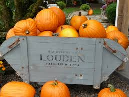 Pumpkin Patch Spokane Valley Wa by I Wish I Were A Walton October 2011