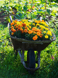 Flowers For Flower Beds by Landscaping 101 Different Types Of Plants Hgtv