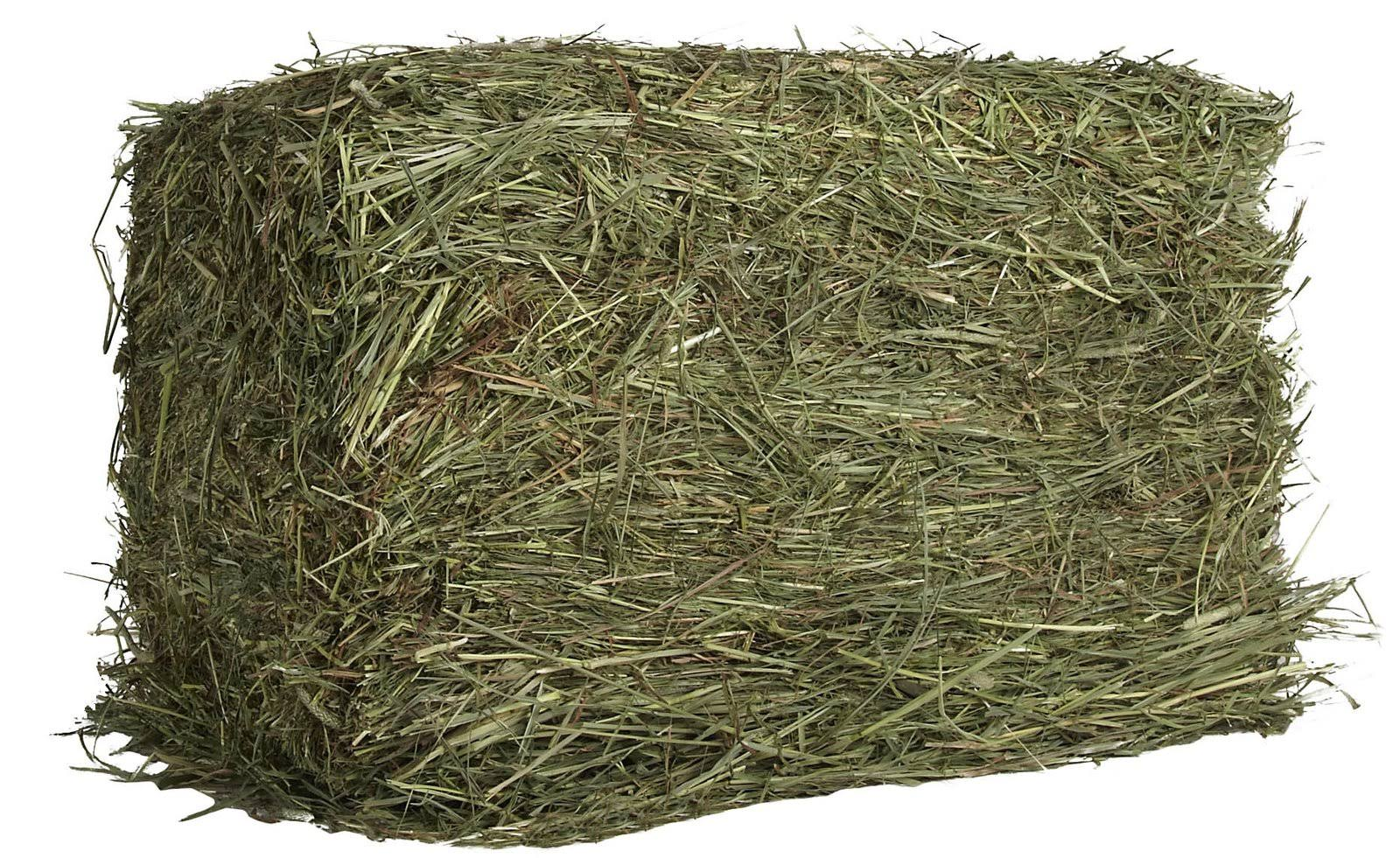 Oxbow Animal Health Western Timothy Hay for Pets - 25lbs