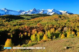 Colorado Springs Christmas Tree Permits by Uncompahgre National Forest Outthere Colorado