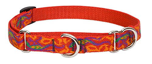 "LupinePet Originals 3/4"" Go Go Gecko 10-14"" Martingale Collar for Small Dogs"