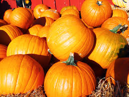 Pumpkin Fest Highwood by Best Fall Activities For Families In The Us Traveling Mom