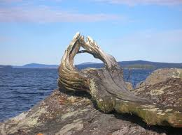 Driftwood Christmas Trees For Sale by Sellers Wilderness Realty U2013 Maine Land Sale Specialists