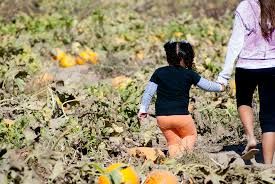 Pumpkin Patch Near Clovis Ca by All Categories Melissa Pointer Photography