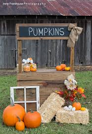 Fresno Area Pumpkin Patch by Best 25 Halloween Mini Session Ideas On Pinterest Fall Mini