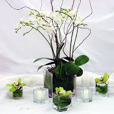 Potted Flower (esp Orchid) Centerpiece Ideas - NEED HELP! :) :  wedding Images?q=tbn:ANd9GcRCGKJagPW4VP30fG2FdF34H2GU4oUAXh3HJVtBaAbcH7Ksq X