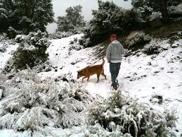 Blue Heeler Shedding In Winter by How Seasonal Changes Affect Your Dogs Jackboy U0027s Dog Bakery