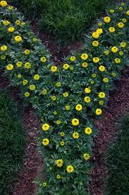 Flowers For Flower Beds by Child U0027s Alphabet Garden U2013 Abc Garden Ideas For Kids