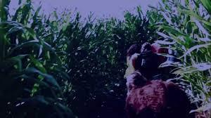 Pumpkin Patch Near Clovis Ca by Acel Fresno Charter High Rasien Hell Haunted Corn Maze