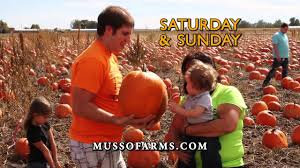 Pumpkin Patch Pueblo County by Musso Farms Pumpkin Patch 2014 Youtube