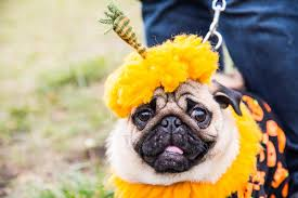 List 3 Other Names For Halloween by Halloween Costumes For Dogs Read This Before Dressing Your Pooch