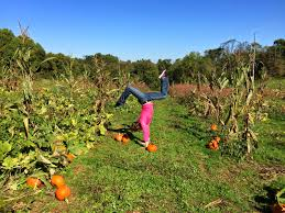 Southwest Ohio Pumpkin Patches by Traveling Handstands October 2014