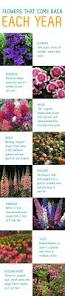 Flowers For Flower Beds by 25 Best Flower Beds Ideas On Pinterest Front Flower Beds Front