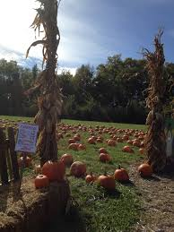 Free Pumpkin Patches In Colorado Springs by Pumpkin Patch At Suburban Lawn U0026 Garden Peanut And Phouka U0027s