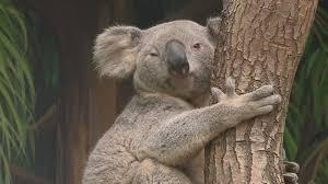 Toledo Zoo Halloween by What A Zoo Coedie The Koala